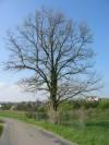 20040425heidelsheim_124-2443_IMG_1